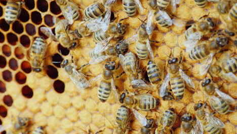 Friendly-Team-Work-A-Family-Of-A-Large-Number-Of-Bees-Productively-Working-On-Creating-Fragrant-Hone