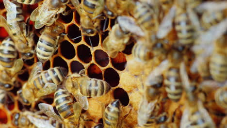 Bees-Work-On-Honeycombs-Macro-Photography