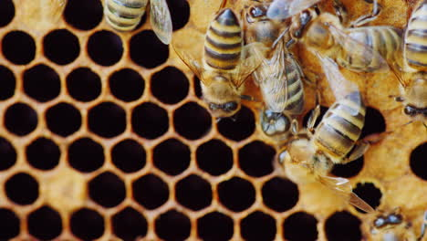 A-Newborn-Bee-Appears-From-The-Honeycomb-Cell-Hd-Video