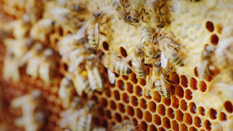 Bees-Work-In-A-Hive-Video-With-A-Shallow-Depth-Of-Field