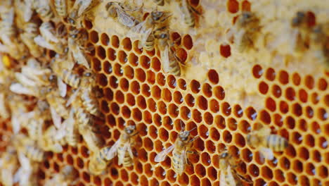 The-Colony-Of-Bees-Is-Working-Inside-The-Hive