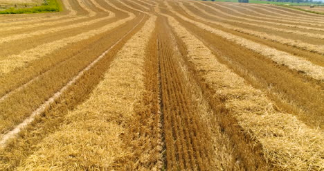 Aerial-View-Of-Harvested-Agricultural-Field-