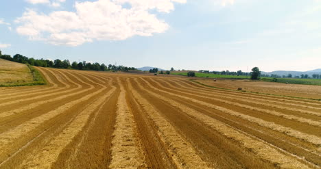 Freshly-Harvested-Wheat-Field-1