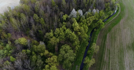 Aerial-View-Of-Forest-1