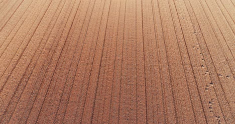 Aerial-View-Fresh-Cultivated-Field-3