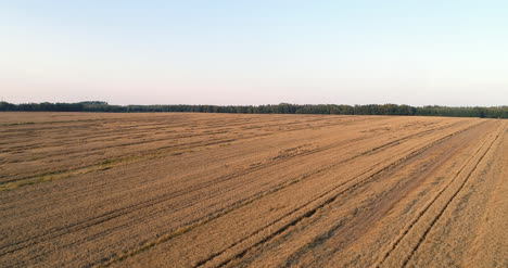 Flying-Over-Wheat-Field-Agriculture-8