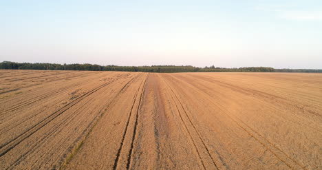 Flying-Over-Wheat-Field-Agriculture-9