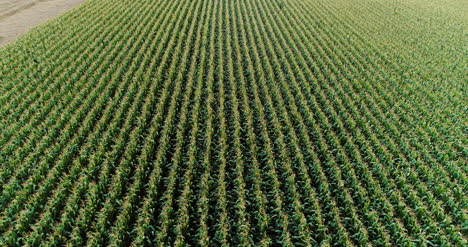 Agriculture-Aerial-Shot-Of-Corn-Field-3