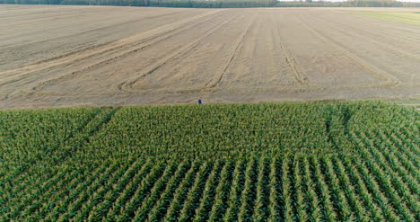 Agriculture-Aerial-Shot-Of-Corn-Field-6