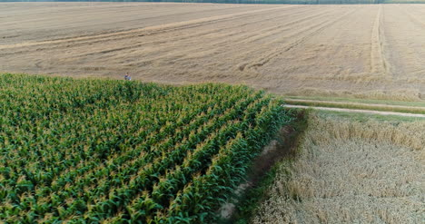 Agriculture-Aerial-Shot-Of-Corn-Field-7