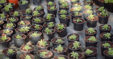 Agriculture-Flower-Seedlings-In-Greenhouse-3