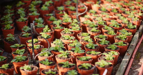 Agriculture-Flower-Seedlings-In-Greenhouse-9