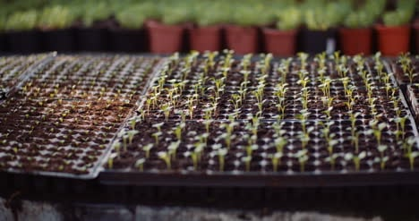 Agriculture-Flower-Seedlings-In-Greenhouse-13