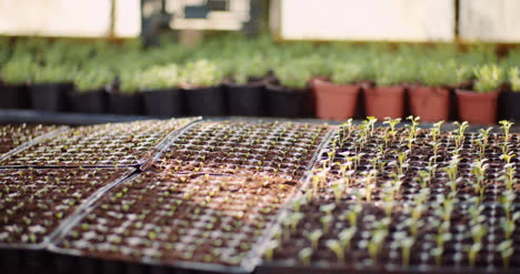 Agriculture-Flower-Seedlings-In-Greenhouse-15