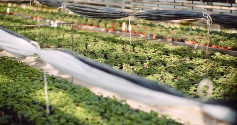 Agriculture-Flower-Seedlings-In-Greenhouse-19