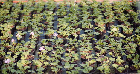 Agriculture-Flower-Seedlings-In-Greenhouse-21