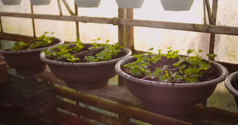 Agriculture-Flower-Seedlings-In-Greenhouse-28