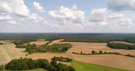 Aerial-View-Of-Forest-In-Summer
