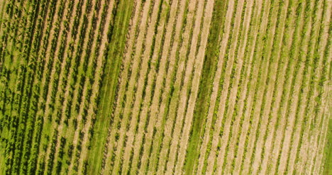 Agriculture-Aerial-View-Of-Vineyard-Vide-Production-3