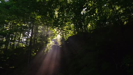 The-Rays-Of-The-Rising-Sun-Are-Holy-Through-The-Forest-Morning-In-The-Forest