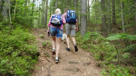 A-Man-And-A-Woman-With-A-Dog-Are-Walking-Along-A-Path-In-The-Forest-Active-And-Healthy-Lifestyle