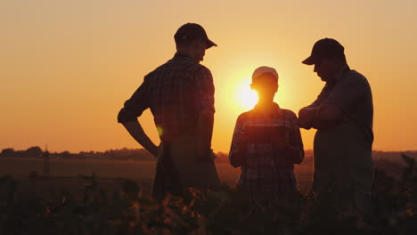 A-Group-Of-Farmers-Are-Discussing-In-The-Field-Using-A-Tablet-Two-Men-And-One-Woman-Team-Work-In-Agr