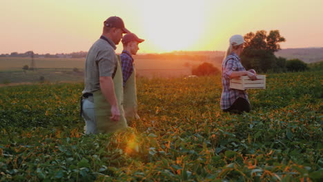 A-Group-Of-Workers-Harvest-In-The-Field-Carry-Boxes-Of-Vegetables-Organic-Products-From-The-Family-F