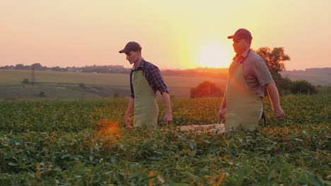 Father-Farmer-And-Son-Together-Carry-A-Box-With-A-Crop-On-The-Field-Family-Agribusiness