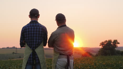 Two-Farmers---Father-And-Son-Are-Standing-On-The-Field-Looking-Into-The-Distance-Back-View