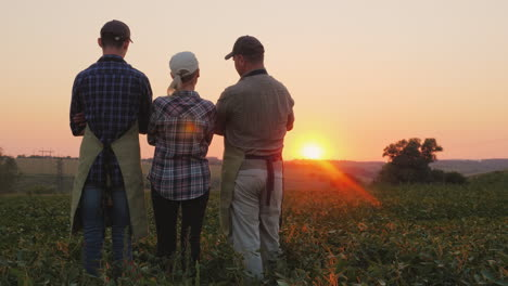 A-Group-Of-Farmers---A-Woman-And-Two-Men-Watching-The-Sunset-Over-The-Field-Family-Agribusinest