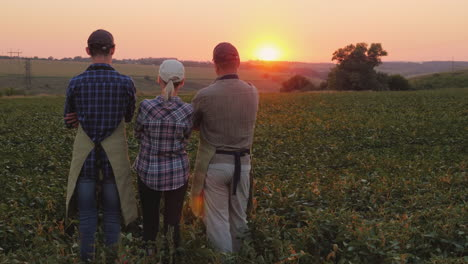 The-Family-Of-Farmers---Husband-Wife-And-Adult-Son-Stand-On-The-Mole-Admire-The-Beautiful-Sunset