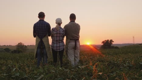 Family-Of-Farmers-Watching-The-Sunset-In-The-Field-Rear-View
