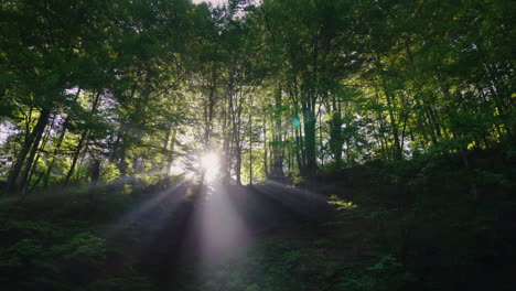 Beams-Of-Light-Shine-Through-The-Branches-Of-Trees-In-The-Forest