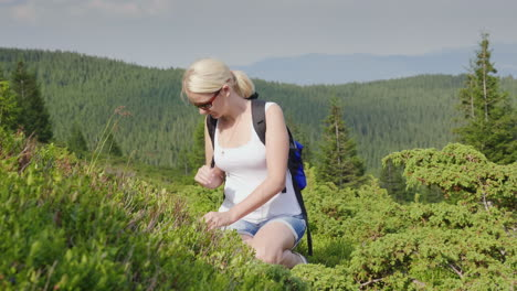 A-Person-Collects-Wild-Berries-In-The-Mountains