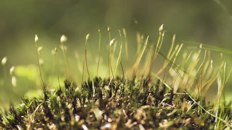 Close-Shot-On-Moss-In-The-Woods