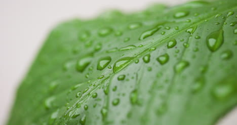 Water-Drops-On-Leaf-Surface-3