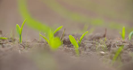 Crops-Growing-In-Cultivated-Soil-At-Farm-1