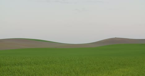 Agriculture-Wheat-Field-Agriculture-Development-1