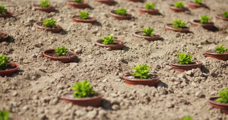 Potted-Plants-Growing-On-Field-In-Summer