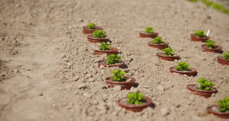 Potted-Plants-Growing-On-Field-In-Summer-1