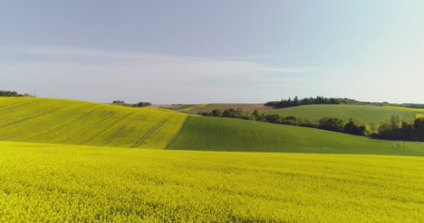 Scenic-View-Of-Canola-Field-Against-Sky-12