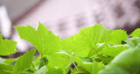 Water-Drops-On-Leaf-Surface-9