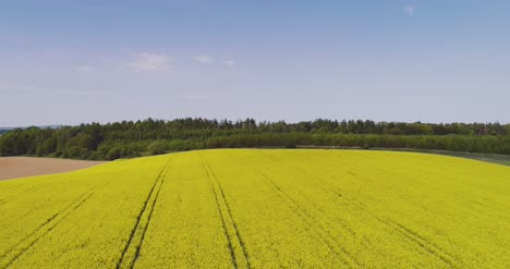 Scenic-View-Of-Canola-Field-Against-Sky-15