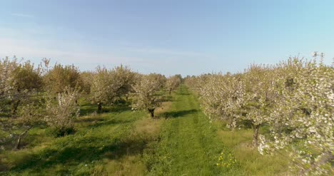 Apple-Orchard-In-August-Aerial-Shoot-12