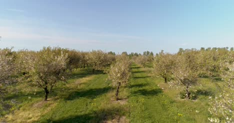 Apple-Orchard-In-August-Aerial-Shoot-13