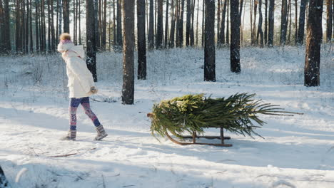 A-Little-Girl-Is-Carrying-A-Christmas-Tree-On-A-Wooden-Sled-Goes-Through-The-Snow-Covered-Forest-The
