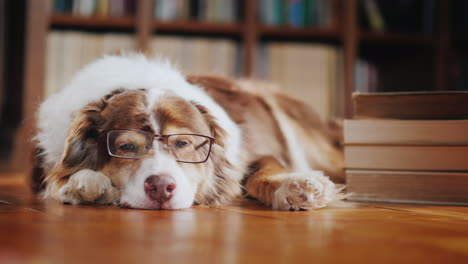 Funny-Student-Dog-Lies-On-The-Floor-Of-The-Library-05