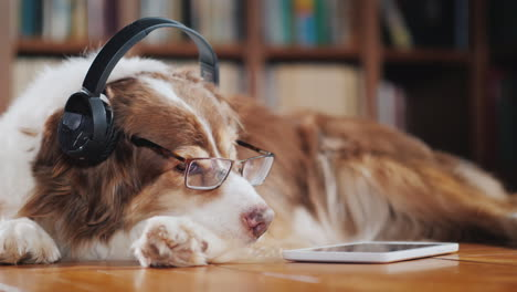 Funny-Student-Dog-Lies-On-The-Floor-Of-The-Library