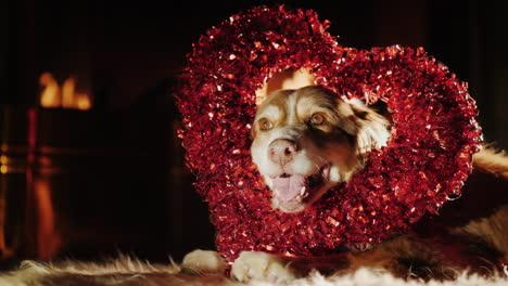 Dog-With-A-Heart-Shaped-Decoration-Is-Lady-On-The-Floor-By-The-Fireplace
