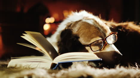 Dog-Wearing-Glasses-Beside-Open-Book-and-Fireplace